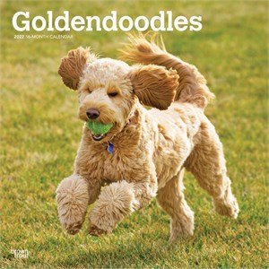 Goldendoodle Calendar 2015 Brown Trout