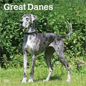 Great Danes Non Cropped Calendar 2014