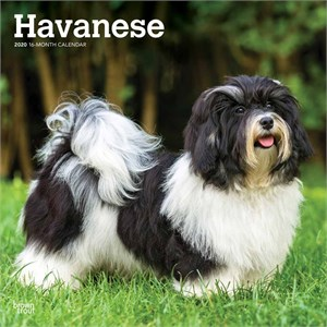 Havanese Calendar 2015