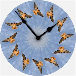 Red Tail Hawk Wall Clock