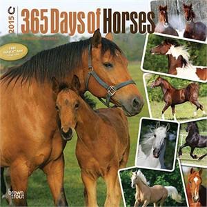 Horses 365 Days Calendar 2015