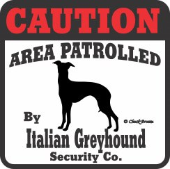 Italian Greyhound Bumper Sticker Caution