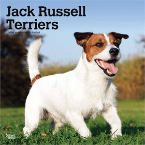 Jack Russell Terriers Calendar 2016 Non Cropped