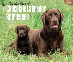 For the Love of Chocolate Labrador Retrievers Deluxe Calendar 2015