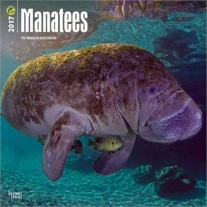 Manatees Calendar 2015