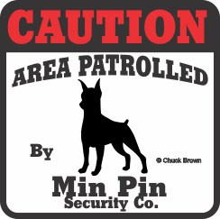 Miniature Pinscher Bumper Sticker Caution