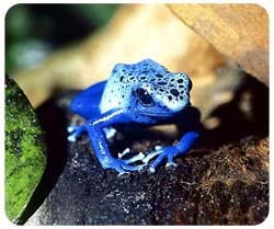 Blue Poison Frog Mousepad