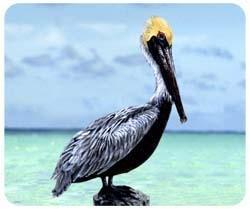 Pelican Mousepad