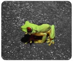 Tree Frog Mousepad