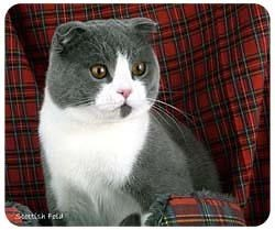 Scottish Fold Cat Mousepad