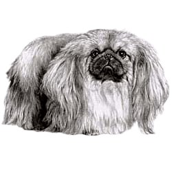 Pekingese T-Shirt - Eye Catching Detail