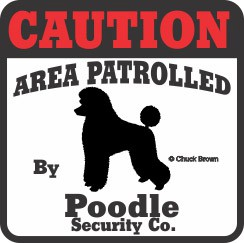 Poodle Bumper Sticker Caution
