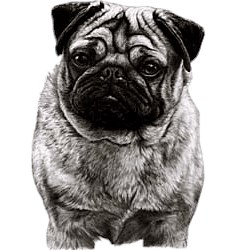 Pug T-Shirt - Eye Catching Detail