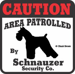 Schnauzer Bumper Sticker Caution
