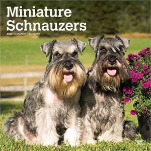 Schnauzer Miniature Non-Cropped Calendar 2015