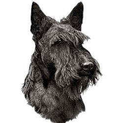 Scottish Terrier T-Shirt - Eye Catching Detail