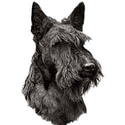 Scottish Terrier T-Shirt - Eye Catching Detail