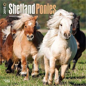Shetland Ponies Calendar 2015