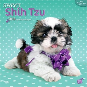 Remarkable Shih Tzus By Myrna Calendar 2016