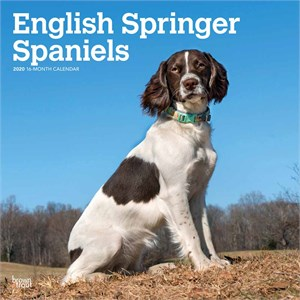 Springer Spaniels Calendar 2015