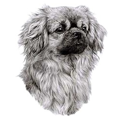 Tibetan Spaniel T-Shirt - Eye Catching Detail
