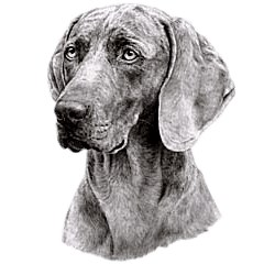 Weimaraner T-Shirt - Eye Catching Detail