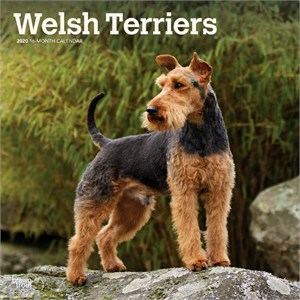 Welsh Terriers Calendar 2015