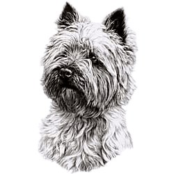West Highland Terrier T-Shirt - Eye Catching Detail