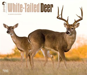 White Tailed Deer Deluxe Calendar 2015