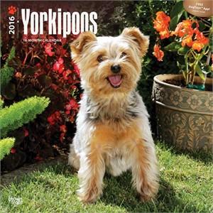 Yorkipoos Calendar 2015